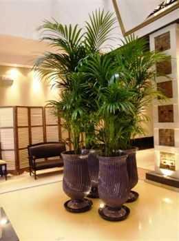 Plantas de interior cuidado de plantas page 4 - Plantas de interior sin luz ...
