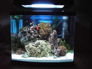 Comprar un pez bonito para pecera normal p gina 3 mediavida - Pecera de pared ...