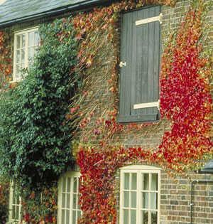 Plantas que trepan en el jardin cuidado de plantas for Plantas trepadoras para muros
