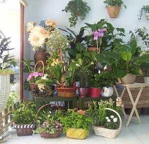Cuidado de plantas cuidado de plantas page 20 for Como decorar el patio de mi casa