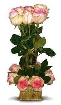 rosas1,jpg