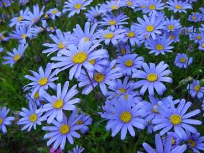 flores colores frios