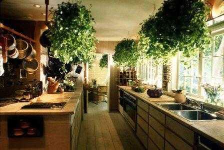 decoracion-plantas2